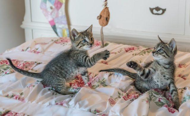Warum sind Katzenvideos so beliebt? Deswegen!